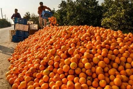 میوههای تنظیم بازاری روی دست دولت ماند