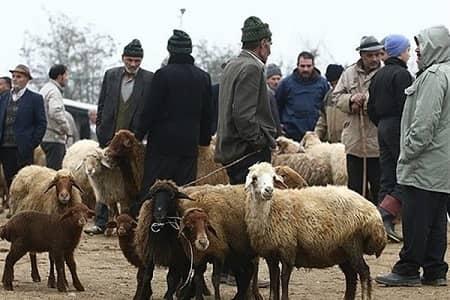 قیمت گوسفند در عید قربان مشخص شد